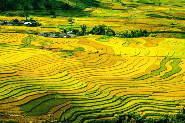 rice-terraces-214725_960_720