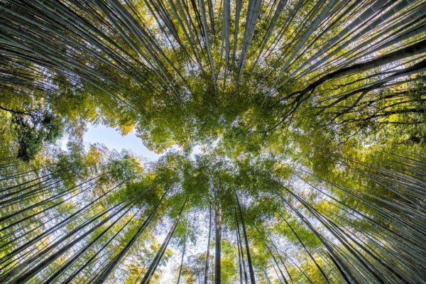 bamboo-1886974_960_720